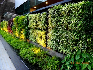 building a vertical garden