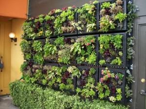 wall gardens