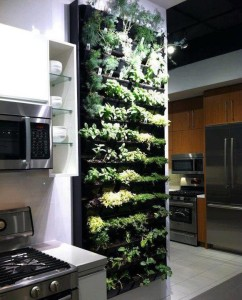 wall herb garden indoor